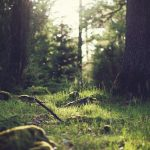 Tranh gạch ốp tường chủ đề rừng cây