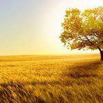 Tranh gạch ốp tường chủ đề nắng vàng